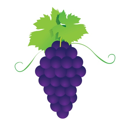 Bunches of grapes. Vector. Stock Vector - 17800950