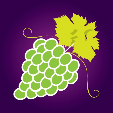 Bunches of grapes. Vector. Stock Vector - 17800947