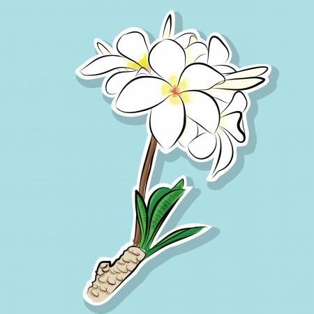 Frangipani flowers - Hand drawn Illustration