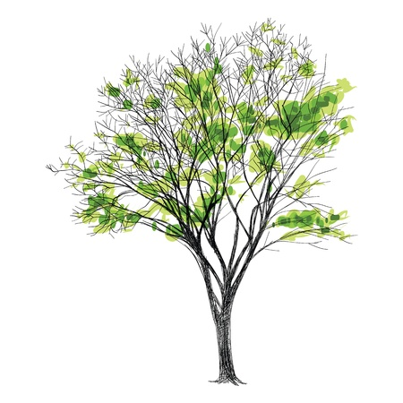 bare tree: large bare tree without leaves - hand drawn