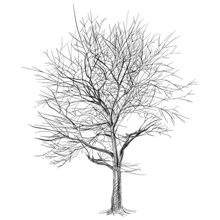 bare tree: large bare tree without leaves (Sakura tree) - hand drawn Illustration