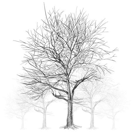 bare: large bare tree without leaves (Sakura tree) - hand drawn Illustration