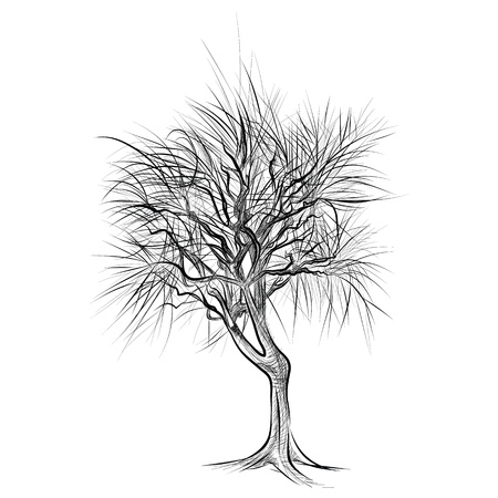 The abstract of large bare tree without leaves - hand drawn Stock Vector - 18657067