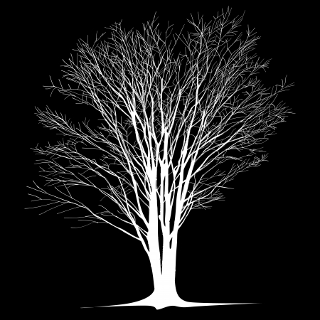 bare: large bare tree without leaves - hand drawn