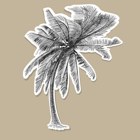 Coconut tree - Hand drawn Stock Vector - 18900962