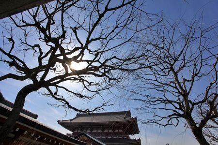 Tree in Asakusa temple Tokyo Japan