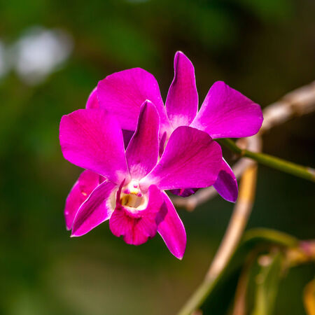 olant: beautiful orchid in the natural  Stock Photo