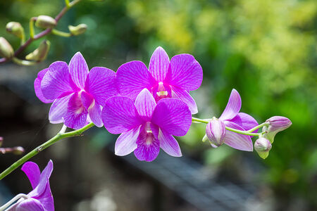 olant: Beautiful Orchid Stock Photo