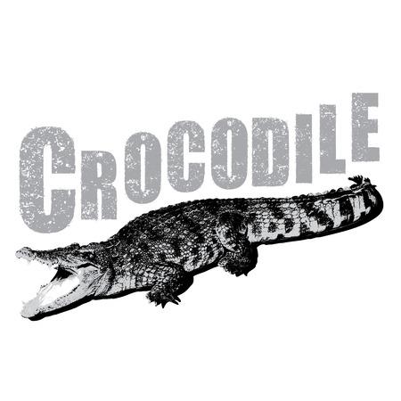 blooded: Crocodile vector, illustration, rubber stamp Illustration