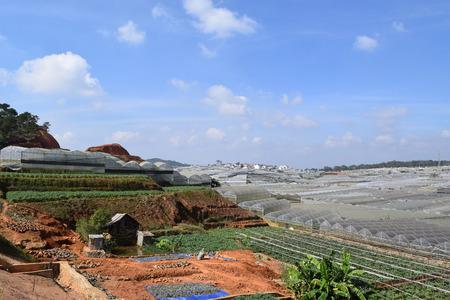 greenhouses: greenhouses in Dalat, Vietnam