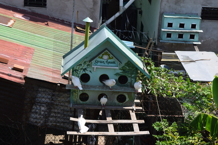 pigeon holes: wooden birdhouse on the roof top of residential