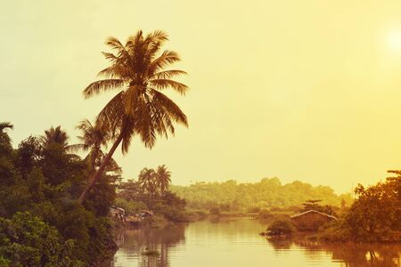 alluvial: vintage tropical river with coconut tree on the bank