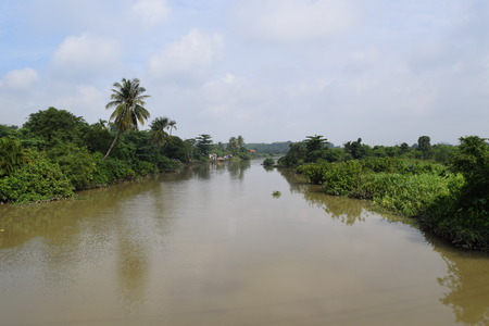 alluvial: tropical river with full of tree on the bank