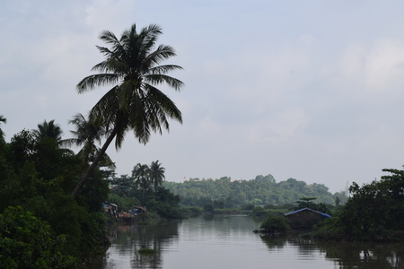 alluvial: tropical river with coconut tree on the bank