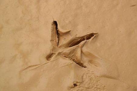 muddy: bird footprint on the wet muddy soil