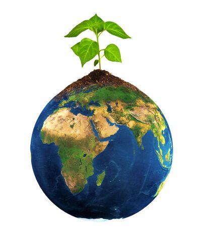 plant grow on earth photo