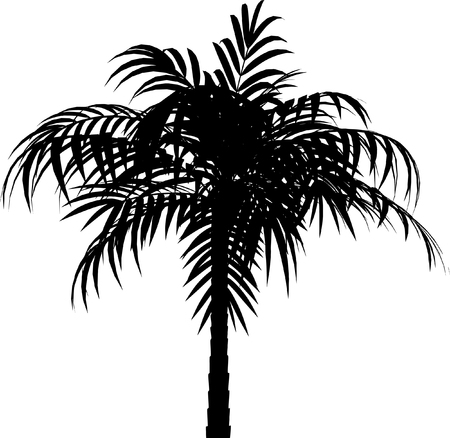 palmtrees: Vector multa imagen de Palm