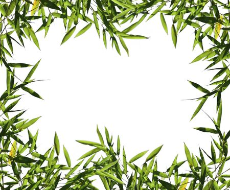 fine image of bamboo leaf background with space for text Stock Photo - 3885541