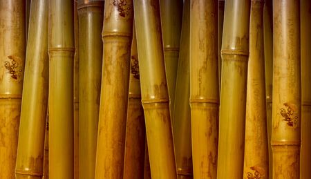 fine image of different bamboo, nature background photo
