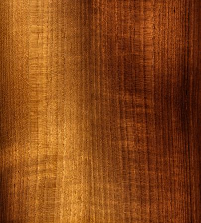 walnut tree: fine image of classic natural wood panel