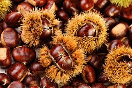 close up image on chestnuts, nature background photo