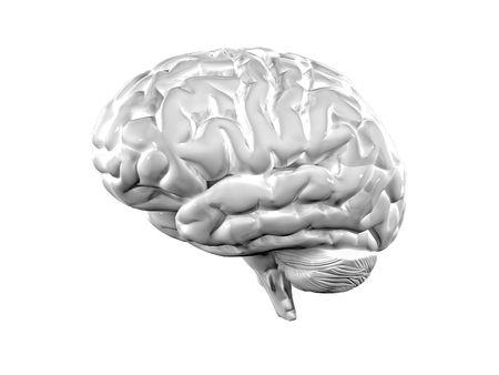 cellule nervose: bella illustrazione 3d di sfondo bianco cervello Archivio Fotografico