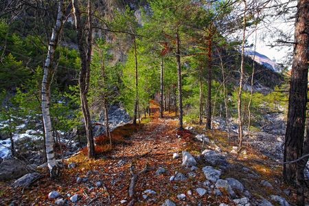 little path in italian alps wood forest background Stock Photo - 6793061