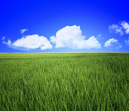 grass area: green grass field and blue cloudy sky background