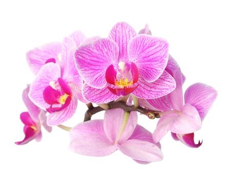 흰색 배경에 보라색 난초 꽃의 근접 촬영 이미지