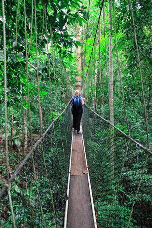 rope bridge: canopy bridge in taman negara, malaysia Stock Photo