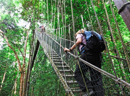 bridge in the forest: canopy bridge in taman negara, malaysia Stock Photo