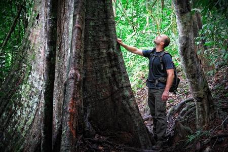 taman: caucasian man in taman negara jungle, borneo malaysia