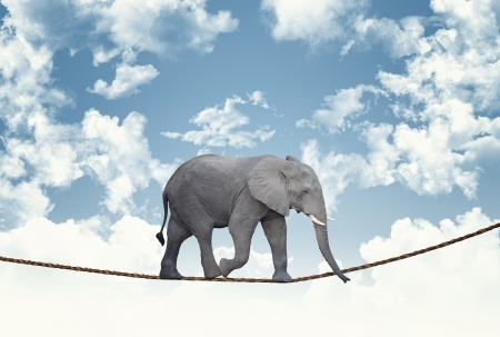 classic african elephant on rope photo