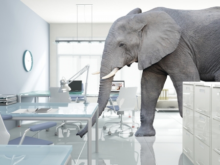 business solutions: huge elephant walk in modern office Stock Photo