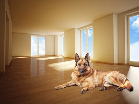 german sheperd on wood floor 3d image photo