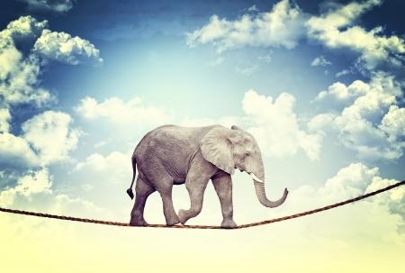elefanten: abstraktes Bild von Acrobat elaphant Lizenzfreie Bilder