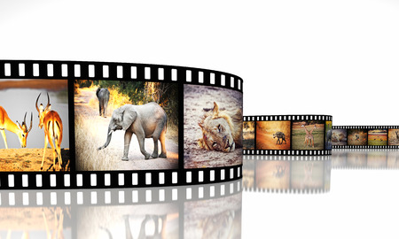 3d film: 3d image of film strip with african animals
