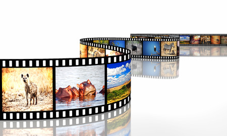 film strip: 3d image of film strip with african animals