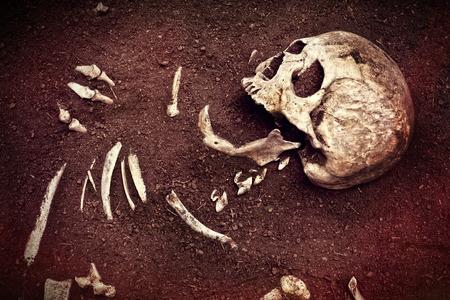 background csi: scene crime and buried bone