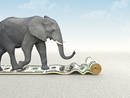 elephant walk on dollar carpet