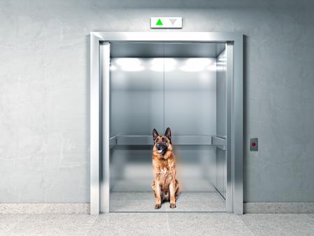 k9: classic elevator and german shepherd