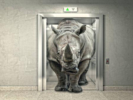 heavy risk: classic elevator and wild rhino