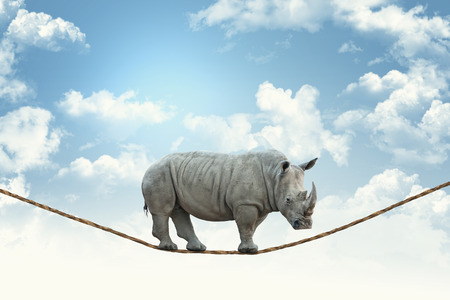 enorme neushoorn lopen op touw Stockfoto