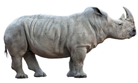 rhinoceros isolated on white background 스톡 콘텐츠