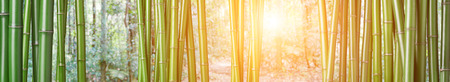 closeup of chinese green bamboo