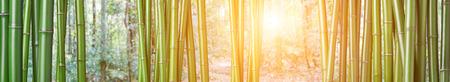bambu: portarretrato de bambú verde chino
