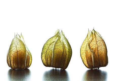 alkekengi: detail of alkekengi fruit background