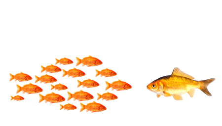 strongest: group of little fish try to be strongest than big one Stock Photo