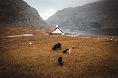 Church in the village of Saksun in the Faroe islands. No people around, grazing sheep. Stok Fotoğraf