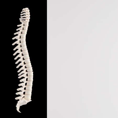 Human backbone bones on bicolor background. copyspace.3d render